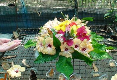 Khu vườn bướm đầy màu sắc ở Phuket