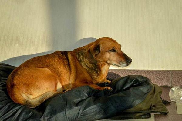 dog-2885-1417059434.jpg