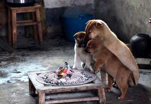 9-dogs-4496-1417144467.jpg