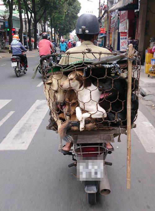 9-dogs-4287-1417576311.jpg