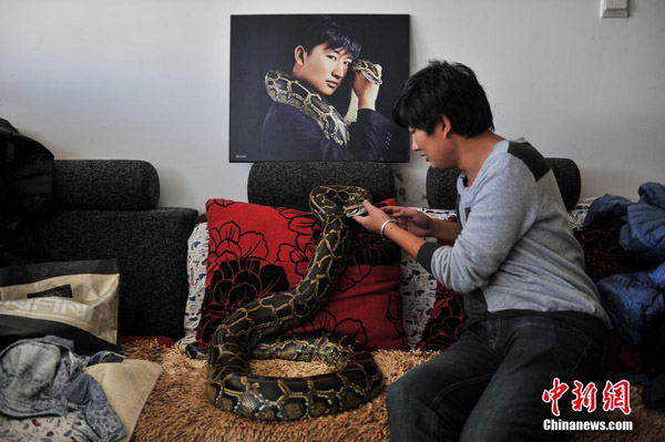 Baituo, from Puer, Yunnan, is 25 years old. Since middle school, he has been living with pythons. A cobra slipped into his house, which should have scared most of people, but not him. He found himself fond of pythons. In the past 10 years, Bais family and friends have accepted to live with snakes gradually. Now working for Yunnan Wild Animal Zoo, Bai would take pythons back home, if new snakes found by the police could not find a proper accommodation in the zoo. He takes good care of these pythons and sends them back to the zoo upon the zoo being qualified to keep these snakes. At present, Bai is living with 25 pythons. Every day back from work, he will check the health condition for every python and feed medicine to ill ones. He has fun playing with pythons that are tender and may sleep with pythons.