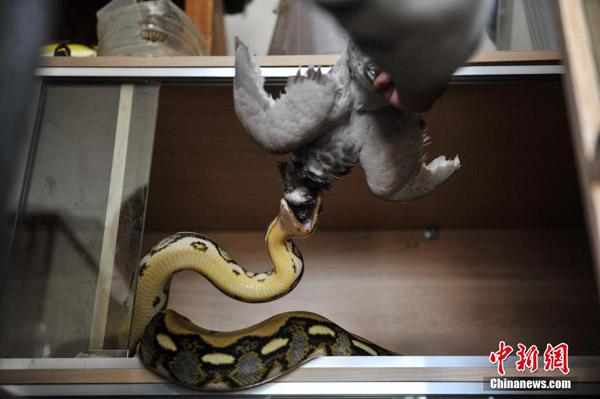 python5-5672-1417685339.jpg