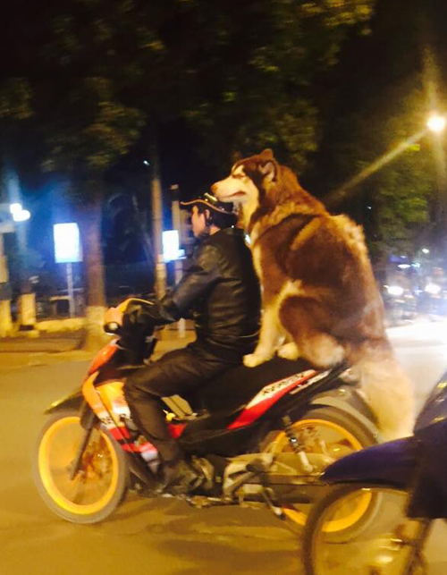 7-dog-6979-1418093793.jpg