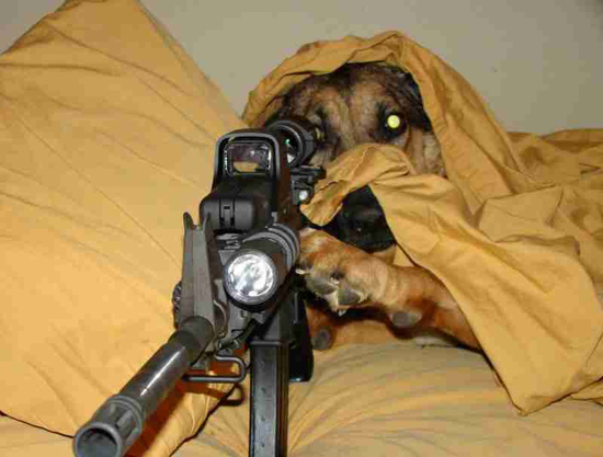 dog-9586-1418964025.jpg