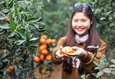 Lên Cao Phong ăn cam tận vườn