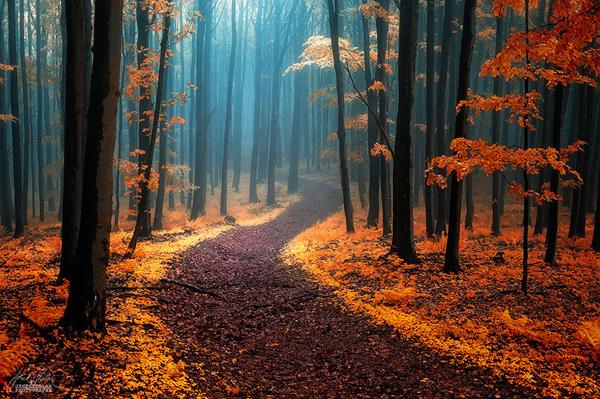 amazing-paths-23-6550-1419652552.jpg