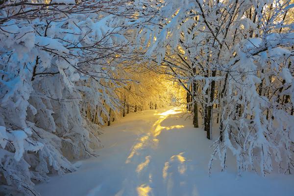 Cảnh mặt trời mọc vào mùa đông ở vườn quốc gia Campigna, Italy.