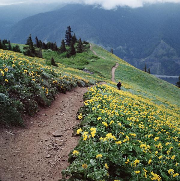 amazing-paths-6-1888-1419652552.jpg