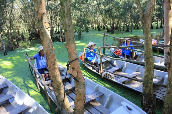 Sau khi tới một bến dừng chân bên trong rừng, du khách sẽ được chuyển sang một chiếc xuồng chèo tay loại nhỏ. Từ đây, chiếc xuồng chầm chậm rẽ con nước đưa bạn vào khu vực đẹp nhất của Trà Sư, nơi những cánh bèo tấm phủ xanh kín mặt nước. Du khách sẽ có cảm giác như mình đang rẽ sóng trên biển nước xanh lá cây mang vẻ đẹp thật lạ lùng như ở thế giới cổ tích.