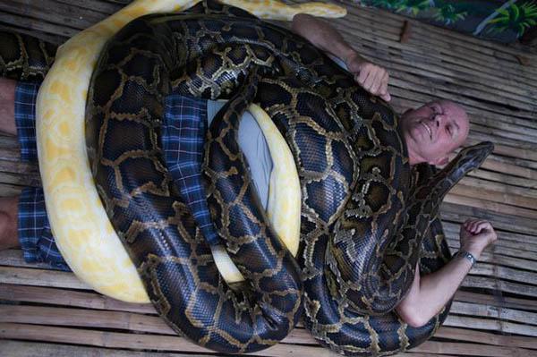 python-2949-1422351613.jpg