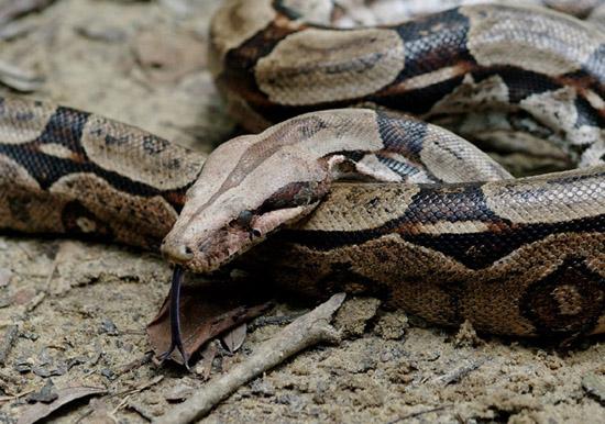 snake-2193-1422846914.jpg