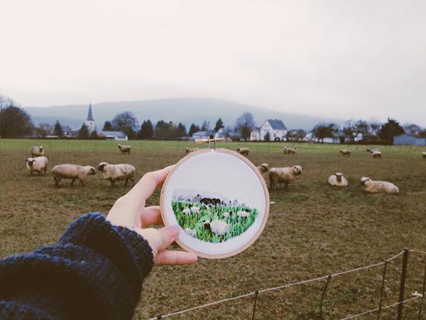 Đàn cừu ở miền quê nước Đức.