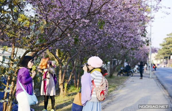 Người dân Đà Lạt và khách du lịch thi nhau chụp ảnh, ghi lại những khoảnh khắc đẹp nhất mỗi năm chỉ có một lần.