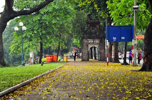 Những hàng cây tuyệt đẹp ở Hà Nội sắp chỉ còn trong ký ức?