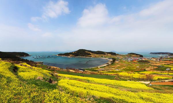 hoa-cai-cheongsan-7488-1428026592.jpg