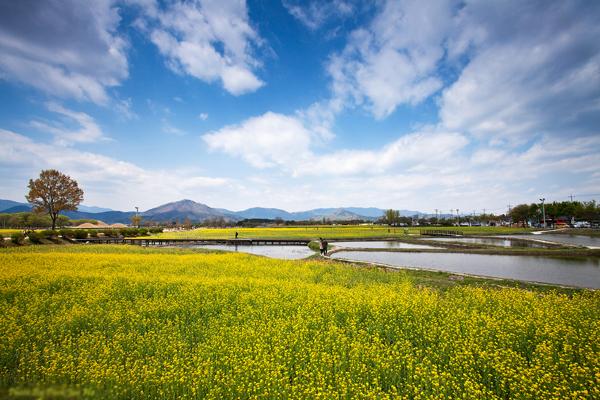 hoa-cai-gyeongju-4448-1428026592.jpg