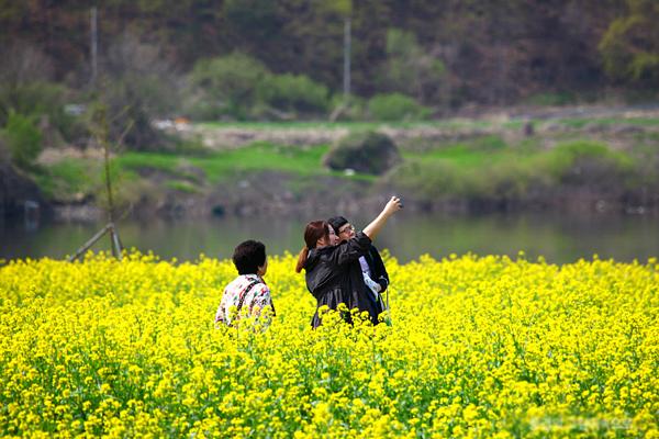 hoa-cai-namji-4712-1428026593.jpg