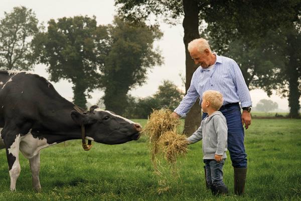Chăm sóc bò sữa cao sản là niềm hạnh phúc của nhiều nông dân Hà Lan.Ảnh:FrieslandCampina.
