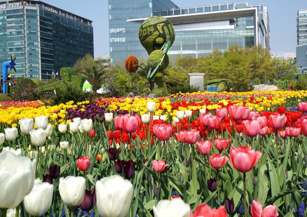 tthq-goyang-tulip-3254-1430701311.jpg