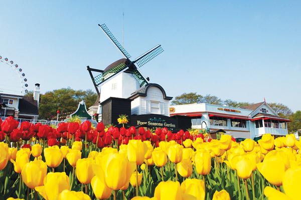 tthq-le-hoi-hoa-tulip-7981-1430701311.jp