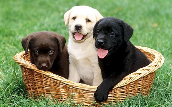 puppies-5512-1430812100.jpg