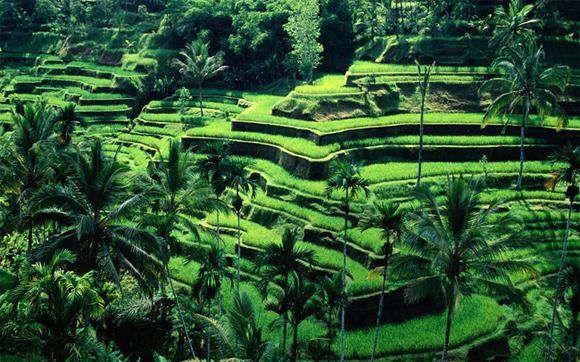 Bali3-1664-1431334290.jpg