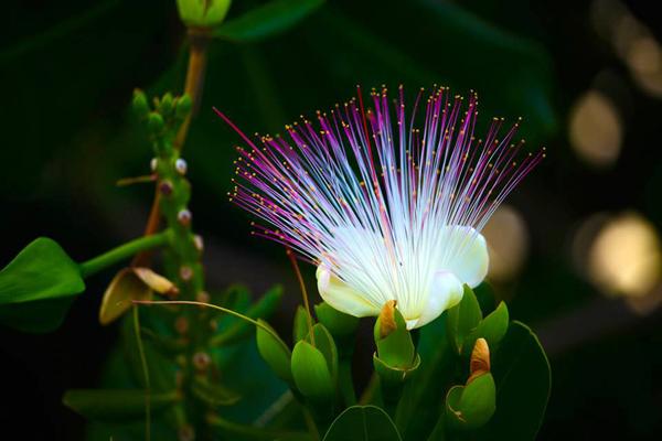 Thậm chí lúc tàn rụng gần hết thì loài hoa này vẫn đẹp lạ thường.