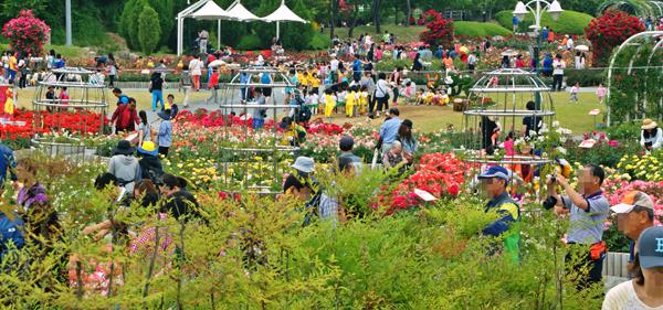Lễ hội hoa hồng thơm ngát ở công viên Ulsan