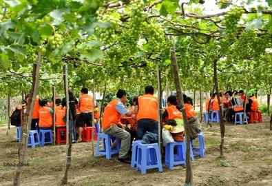 Ăn và chụp ảnh đã đời ở các vườn nho Ninh Thuận