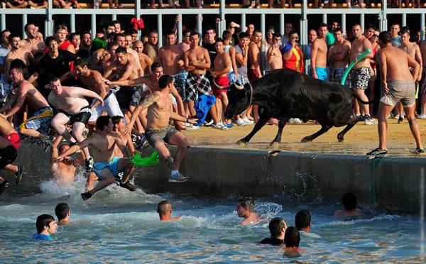 Người chơi phải ra sức dụ cho chú bò nhảy xuống biển.