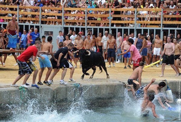 Nhưng trước khi một con bò rơi xuống biển thì cũng phải có đến hàng chục người rơi xuống trước.