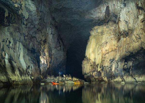 Có cả một khu rừng trong hang động đang phát triển tươi tốt.
