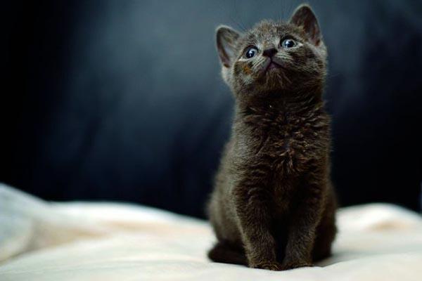 cat-4792-1444106449.jpg