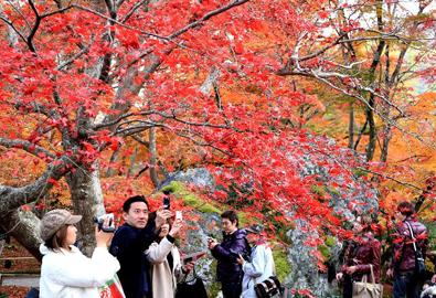 Xao xuyến mùa thu ở cố đô Kyoto Nhật Bản