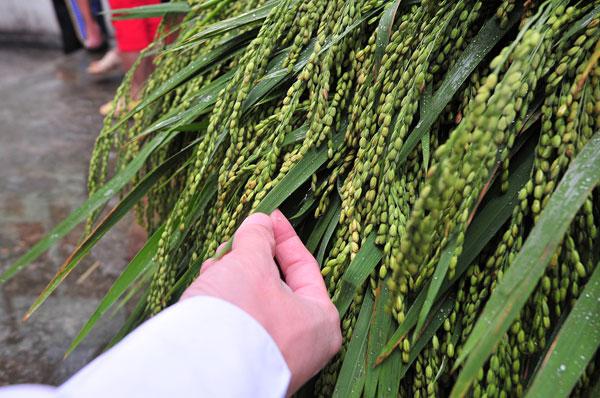 Diễn ra tại khuôn viên đình làng, ngày hội tái hiện không gian văn hóa làng cốm Mễ Trì với hội chợ ẩm thực, triển lãm cốm, các công đoạn làm cốm Mễ Trì, chợ cốm đêm duy nhất tại Hà Nội