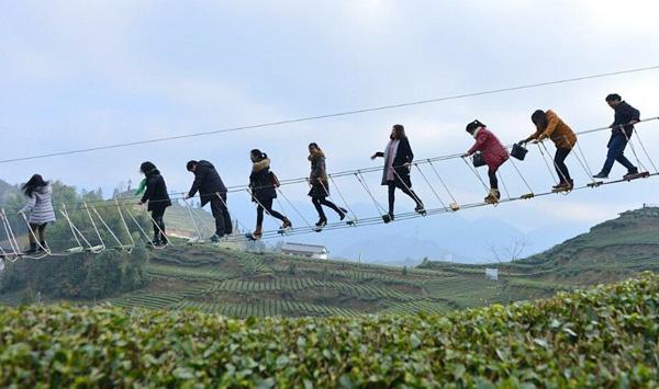 Cầu dây cheo leo bắc qua công viên trà xanh