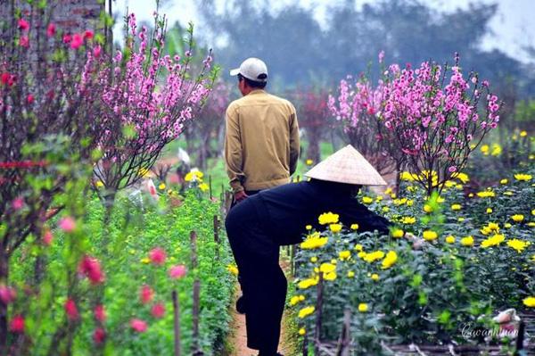 Những làng hoa đẹp ngẩn ngơ mỗi độ xuân về. Ảnh: Caoanhtuan.