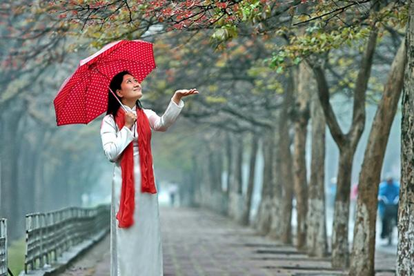 Hà Nội xuân về ẩm ướt dịu dàng trong những cơn mưa bụi.