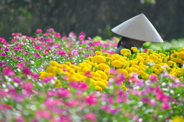 Làng hoa trăm tuổi Sa Đéc là điểm đến thu hút khách du lịch nhiều nhất. Ảnh: mytour.