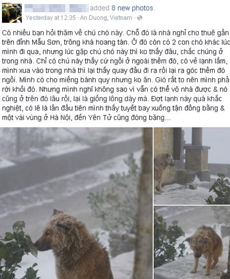Facebooker xót xa hình ảnh chú chó co ro trong mưa tuyết