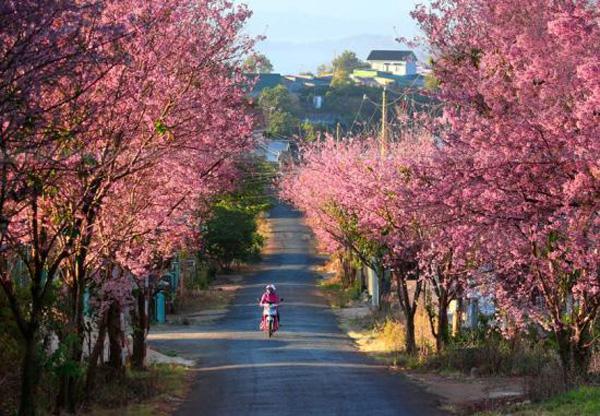 Con đường quyến rũ nhất ở Đà Lạt. Ảnh: dulichdalat.