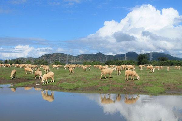 Núi rừng, hồ nước, đồng lúa, cánh đồng cừu,&hòa quyện làm một, tạo nên khung cảnh rất đổi yên bình. Ảnh: Vĩnh Hy.