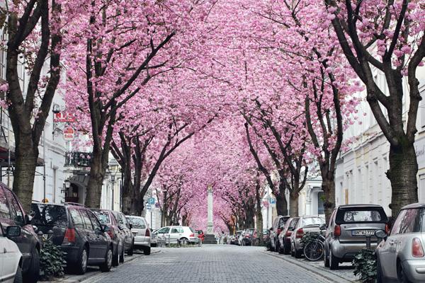 Những con đường hoa anh đào tuyệt đẹp trên thế giới