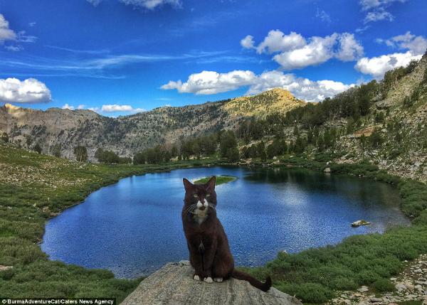 4 chú mèo phượt thủ nổi tiếng 'đi khắp thế gian'