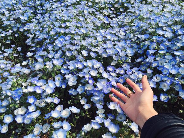 chi-em-phuong-linh-choang-ngop-giua-canh-dong-hoa-xanh-6