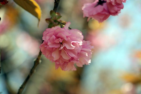 fukushima-vung-dat-cua-nhung-ho-nuoc-xanh-tuyet-dep-page-2-4
