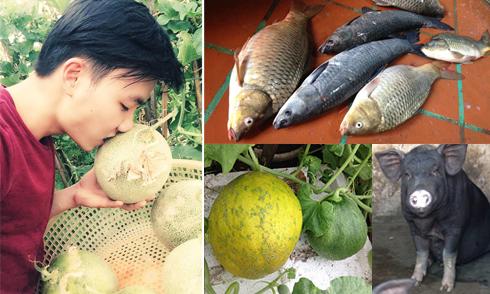 9X Hà thành trồng dưa trên tầng 5 thu hoạch 2,5 tạ một mùa
