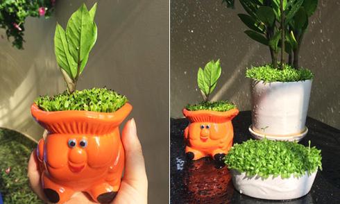 Cô gái Sài Gòn trồng cây may mắn bằng hạt thanh long