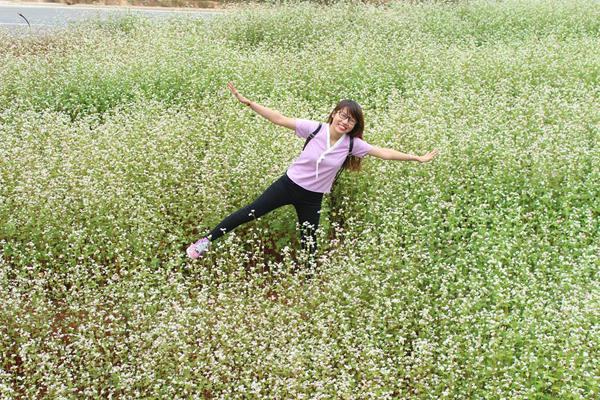 Hoa được trồng thành luống để tạo lối đi vào giữa.