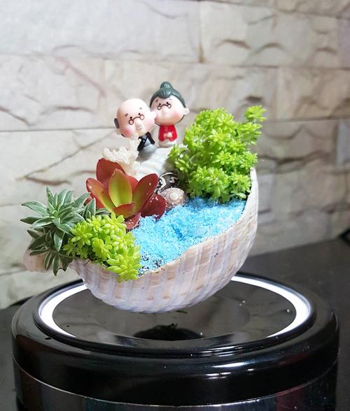 vuon-mini-cua-co-gai-kheo-tay-5